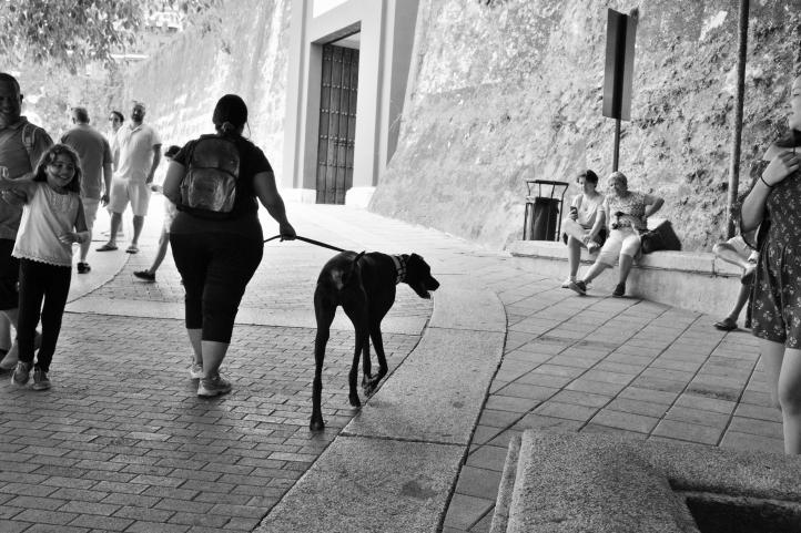 CRR_2641_09_koudelkas_dog